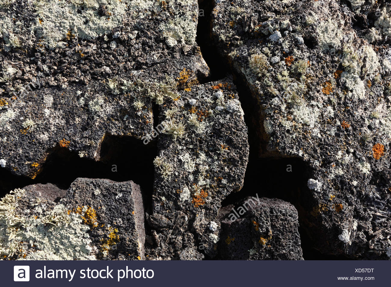 Cracks in a lava field with lichens, Lanzarote, Canary Islands, Spain, Europe - Stock Image