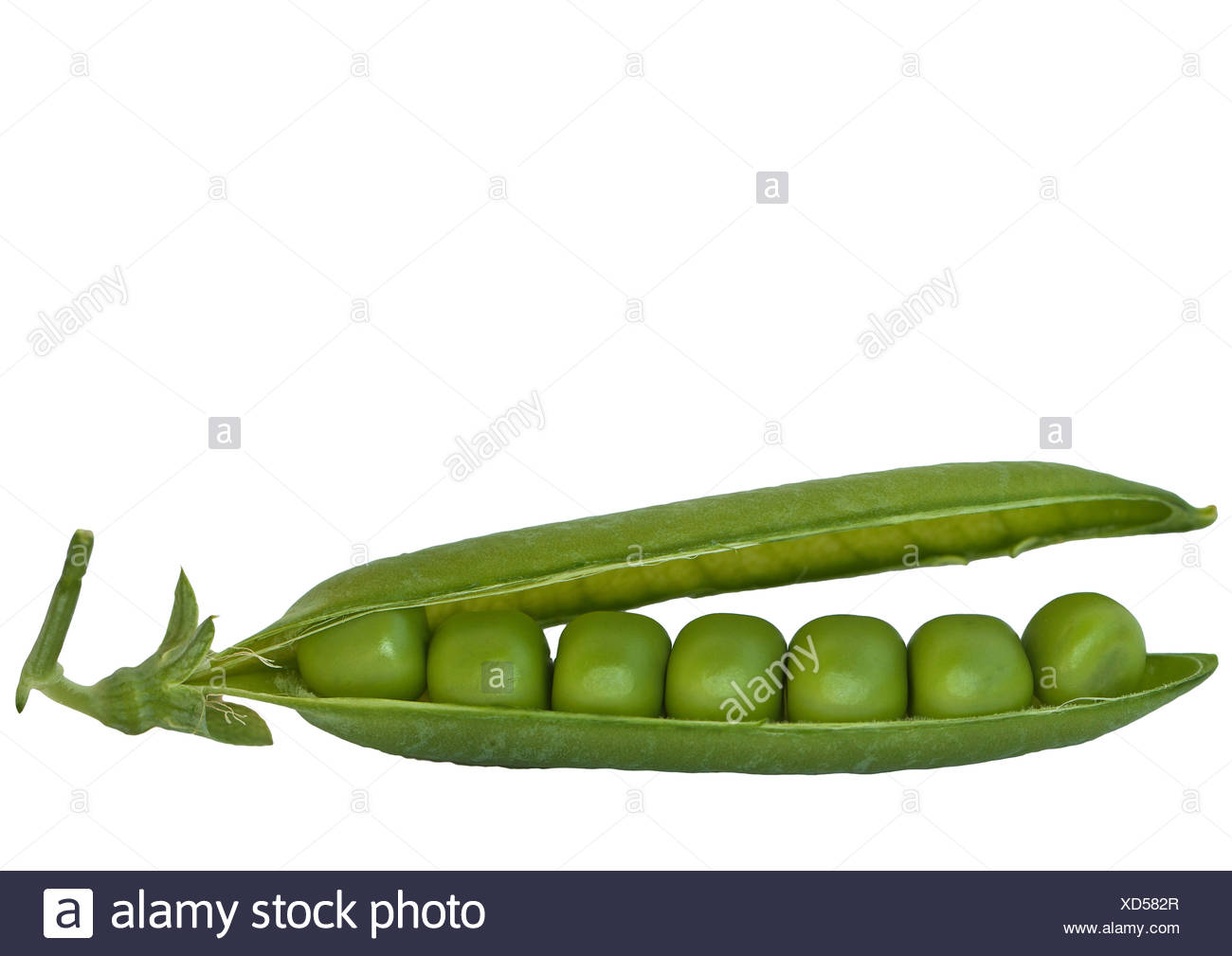 Green Peapod Stock Photos & Green Peapod Stock Images - Alamy
