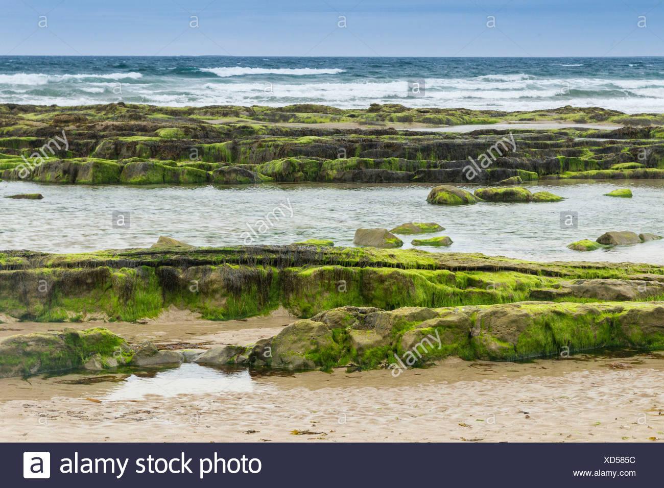Coast at Seahouses, Northumberland, England, United Kingdom, Europe - Stock Image