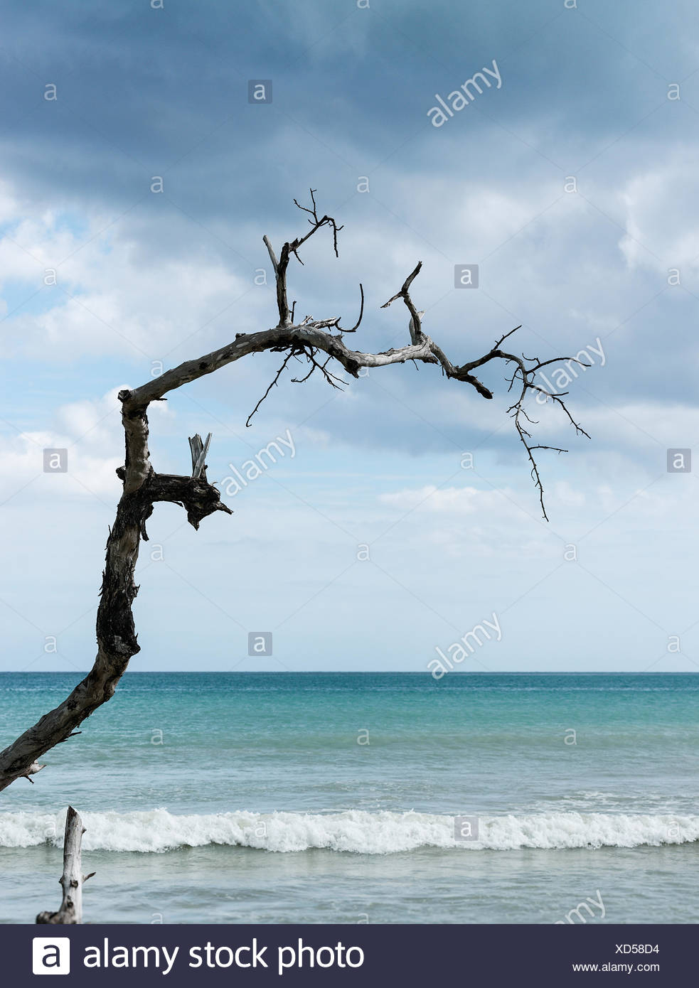 Jagged piece of driftwood reaching out to the ocean water, Negril, Jamaica - Stock Image
