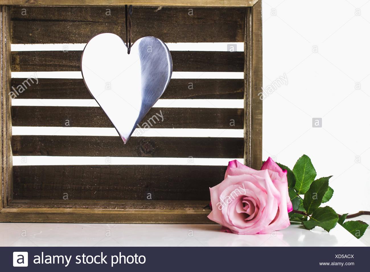 Eine Rose für die Schönheit - Stock Image