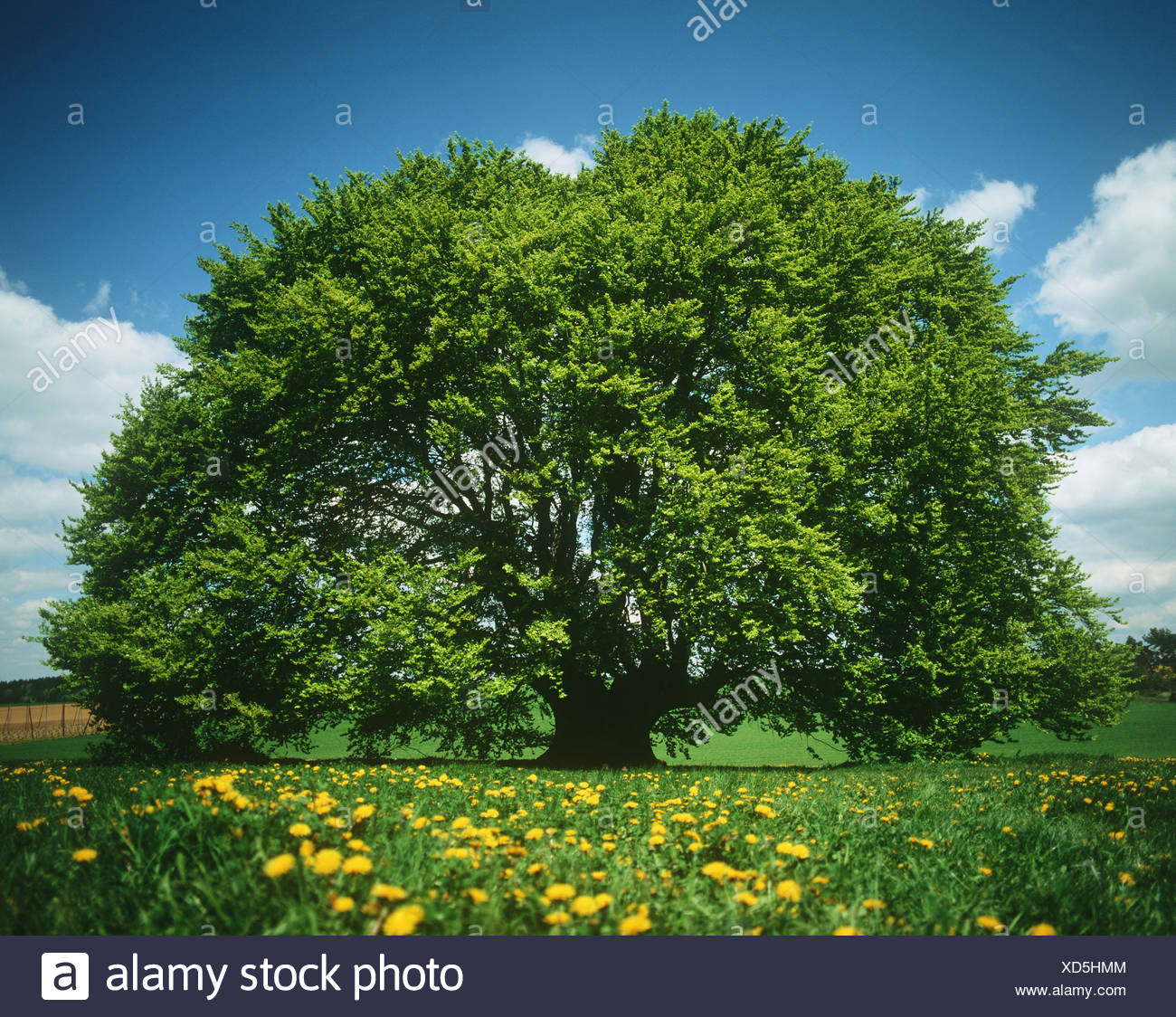 Tree in spring - Stock Image