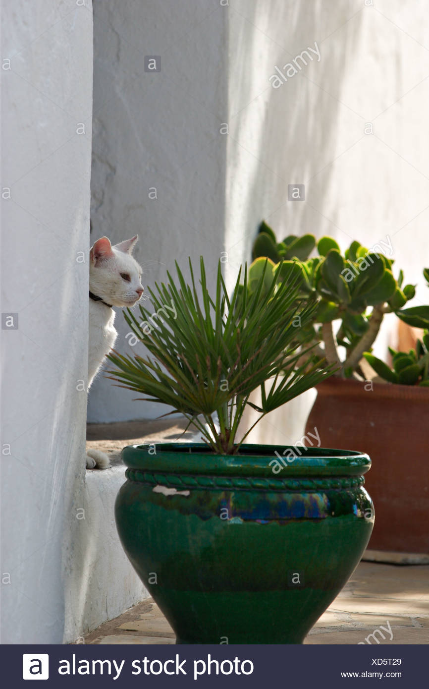 cat in Sant Agusti des Vedrá Ibiza Stock Photo