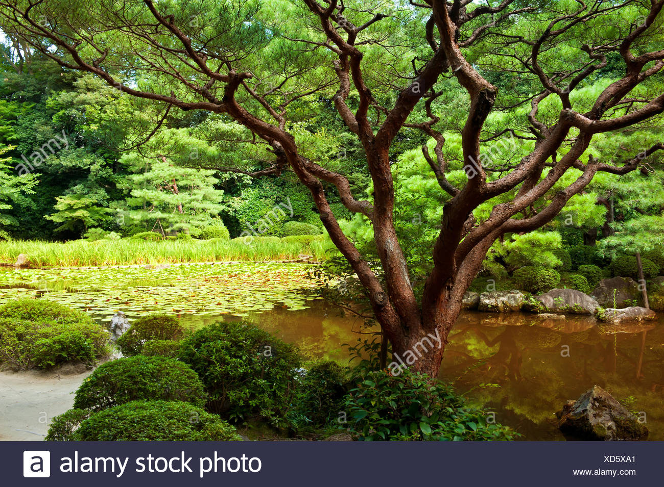 Park Garden Japanese Japan Landscape Scenery Countryside Nature Stock Photo Alamy