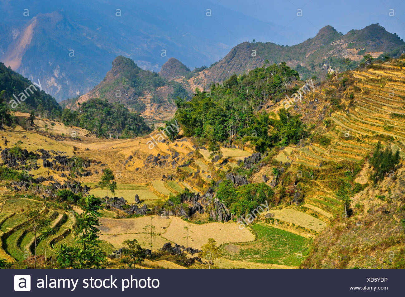 Mountain landscape with rice fields, Si Ma Cai District, Vietnam, Asia - Stock Image