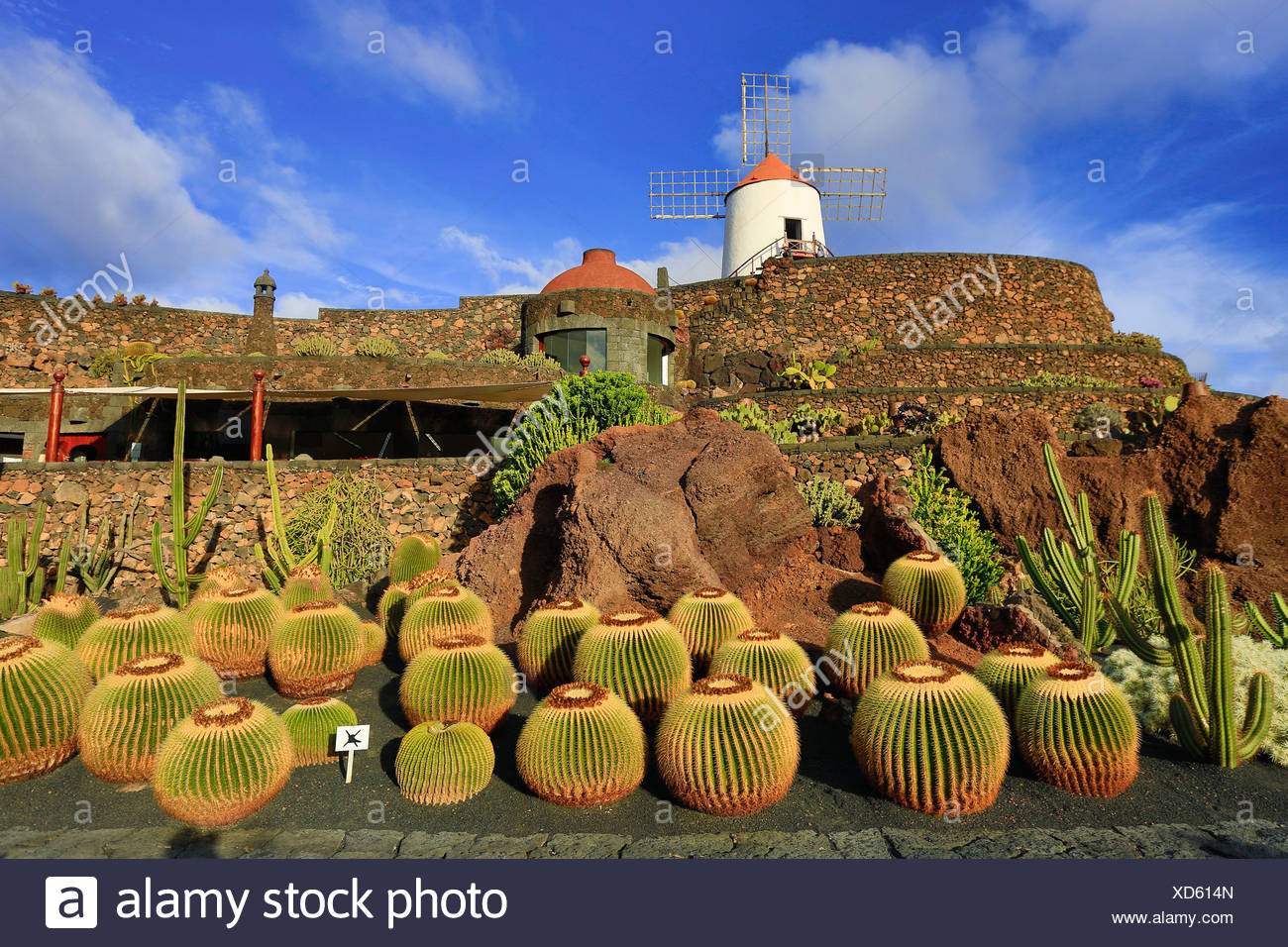 Spain, Europe, Canary Islands, Guatiza, Lanzarote, cactus, plants, garden, island, sunset, wind mill - Stock Image