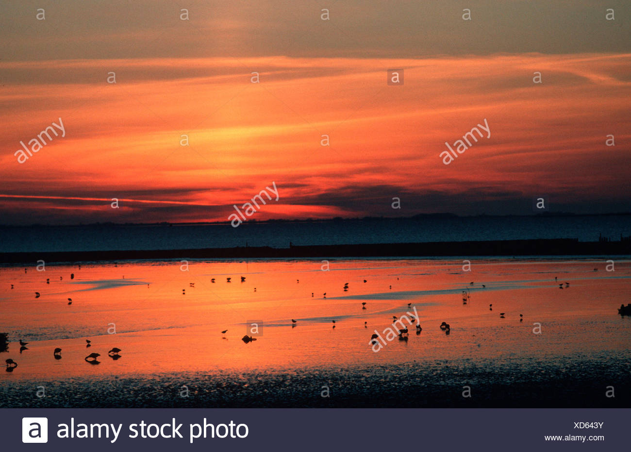 Birds at low tide / Voegel bei Ebbe - Stock Image