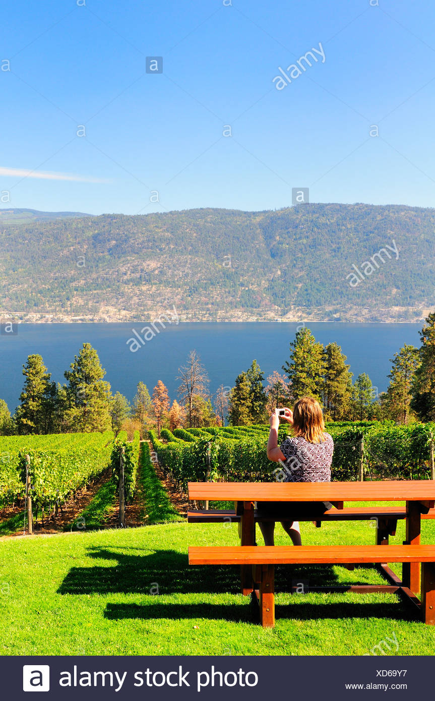 Woman taking pictures Arrowleaf Cellars vineyard - Stock Image