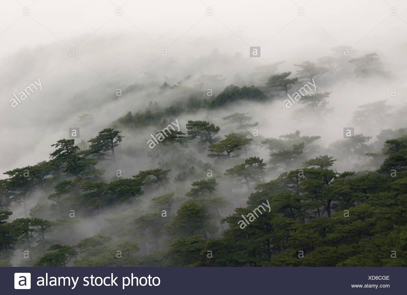 fog covered forest on ai-petri mountain on crimea - Stock Image