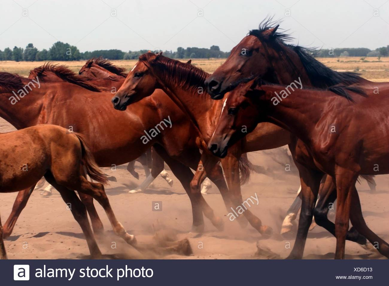 horse animal mammal horses farm motion postponement moving movement sport - Stock Image