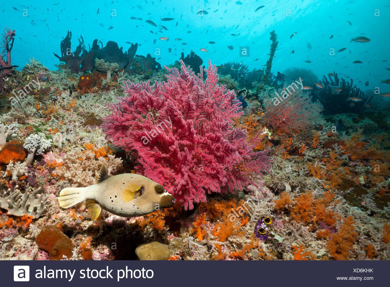 Colorful Coral Reef, Raja Ampat, Indonesia Stock Photo: 283503519 ...