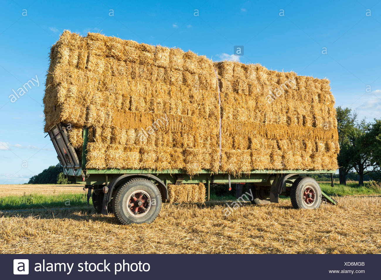 A trailer loaded with bales of straw parked on a field, Baden-Wuerttemberg - Stock Image