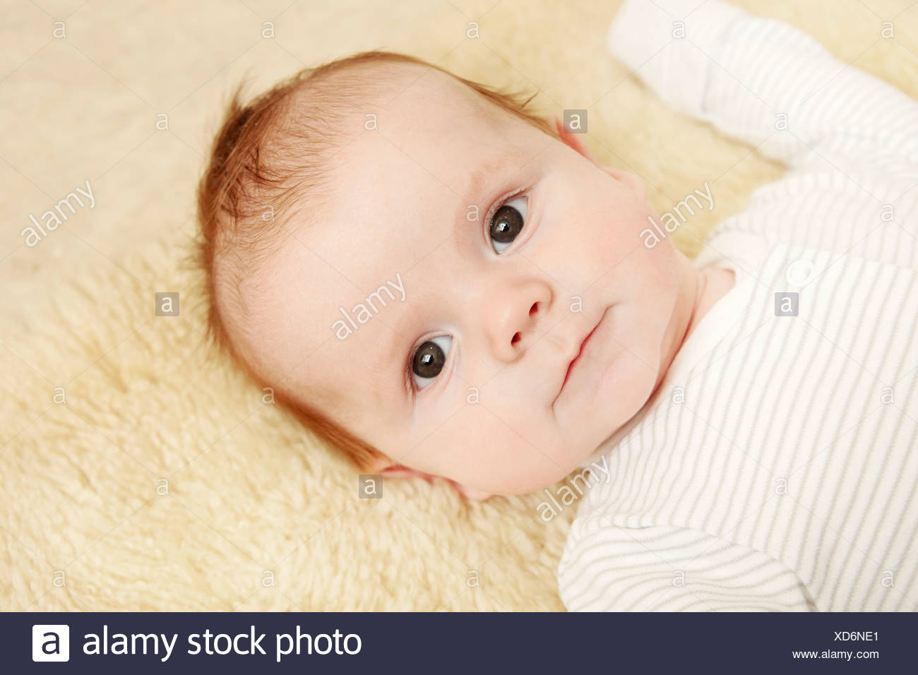 Two month old baby boy lying on furry blanket - Stock Image