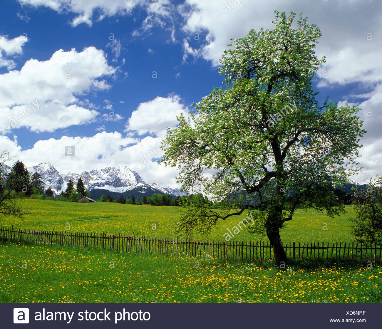 Karwendelgebirge range from the meadows near Kruen, Upper Bavaria, Germany, Europe - Stock Image