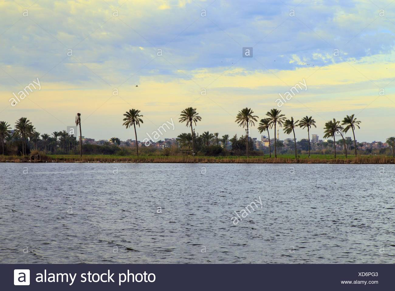 Palm Trees On Riverbank - Stock Image