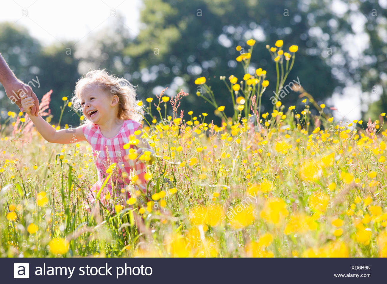 Portrait of smiling young girl holding fathers hand in wildflower meadow Stock Photo