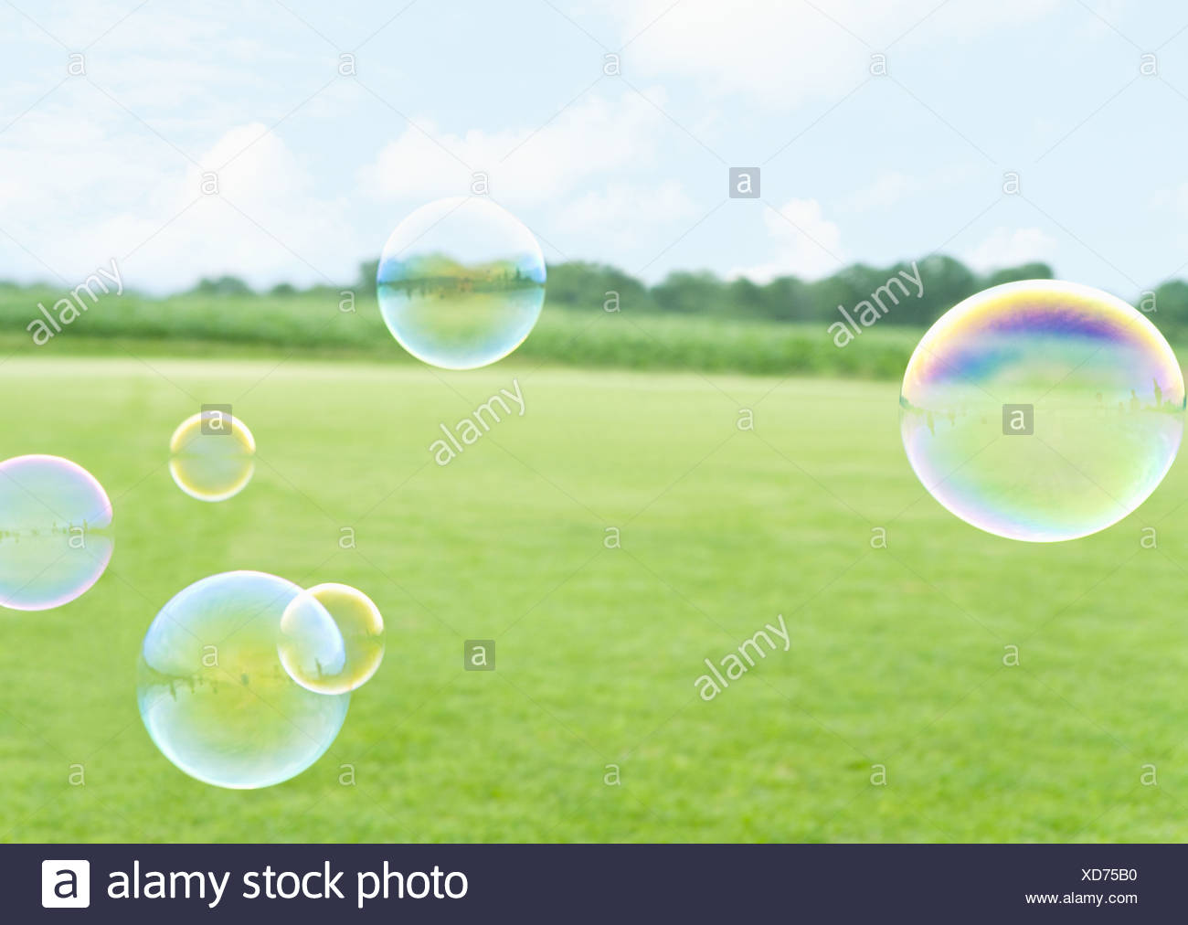 Grass field and bubbles - Stock Image