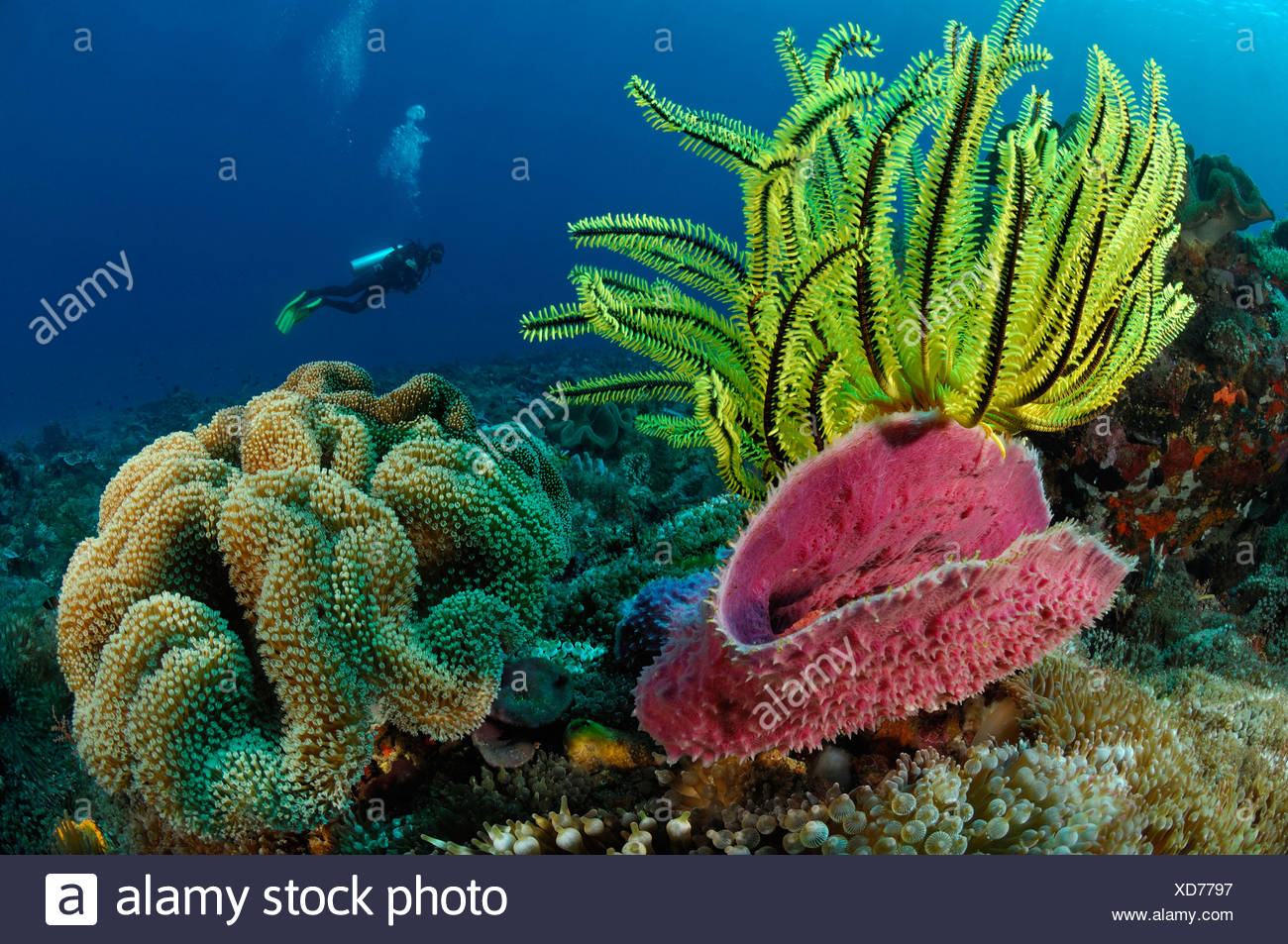 Indopacific Coral Reef, Alor, Indonesia - Stock Image