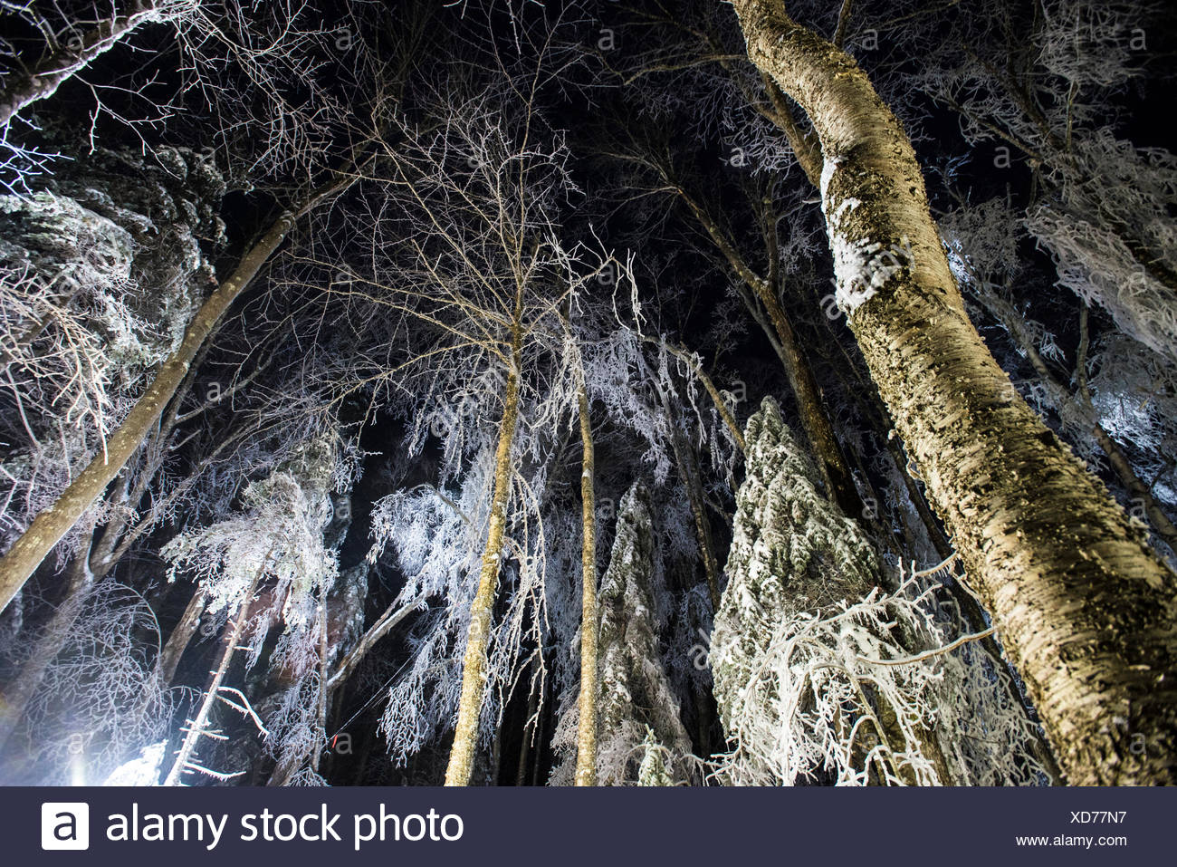 A team of researchers replicating an ice storm during winter in the