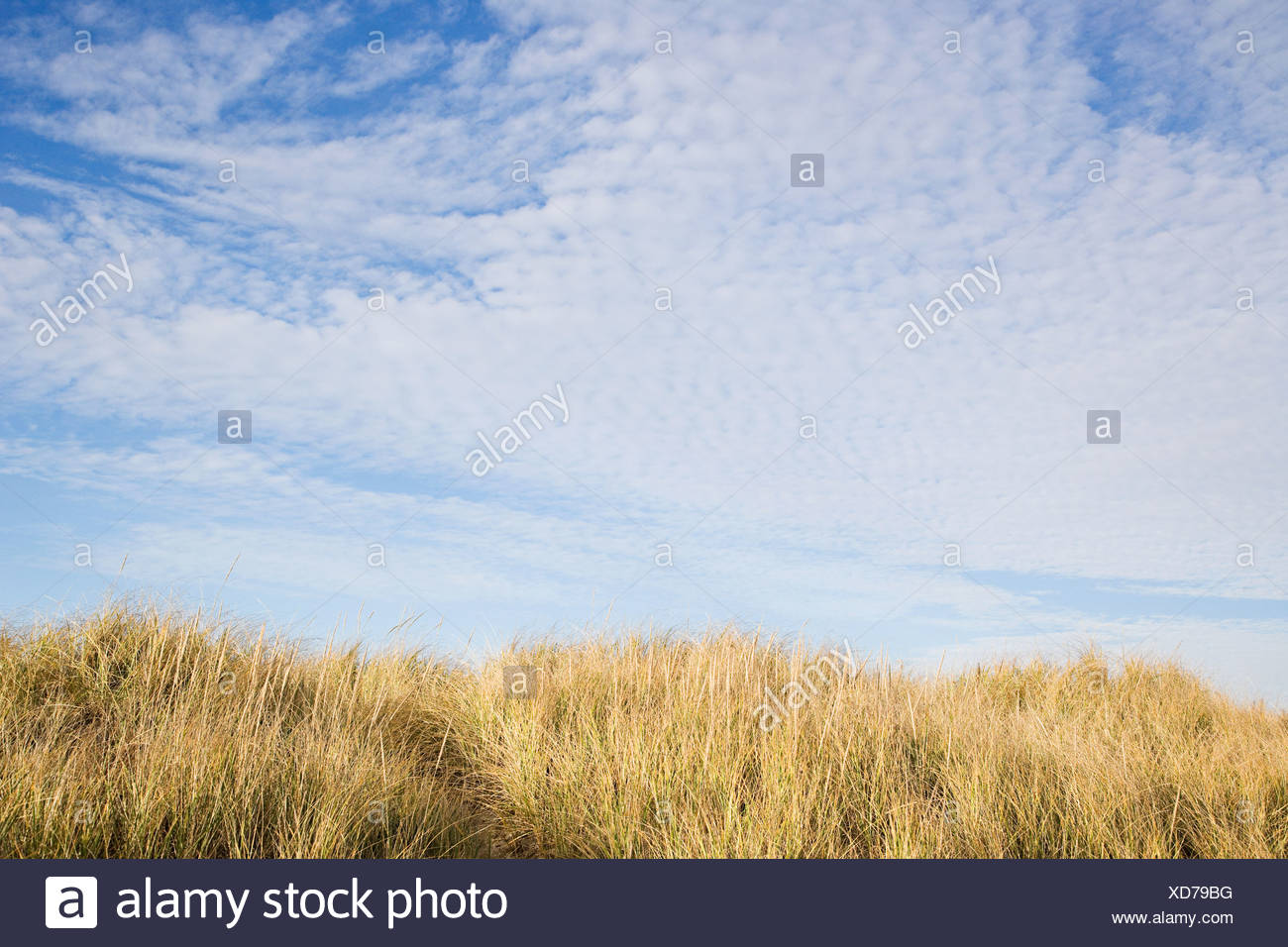 Sky and long grass - Stock Image