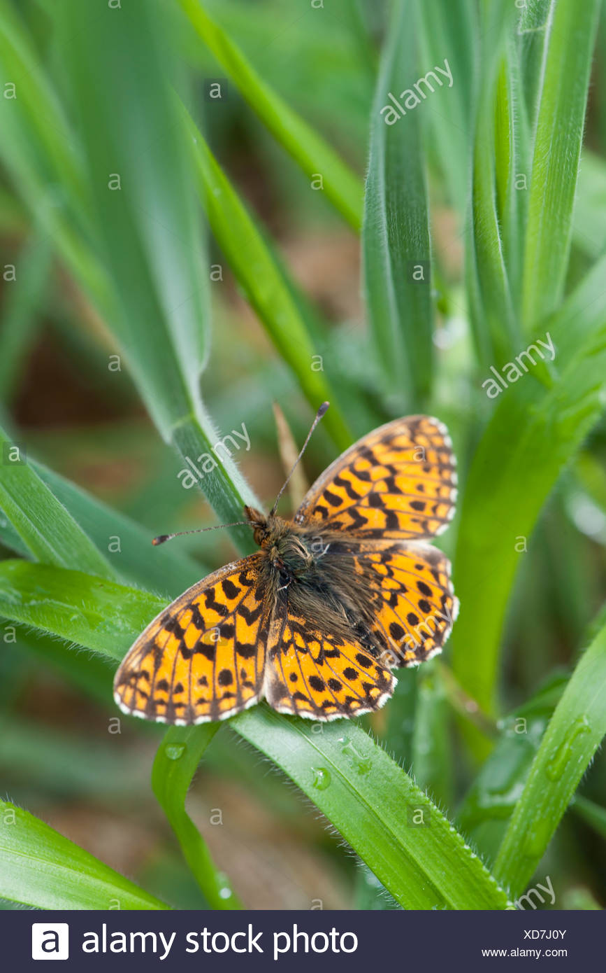 Butterfly on leaf - Stock Image
