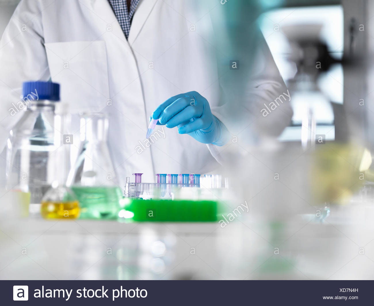 Scientist preparing DNA samples for testing in the laboratory - Stock Image