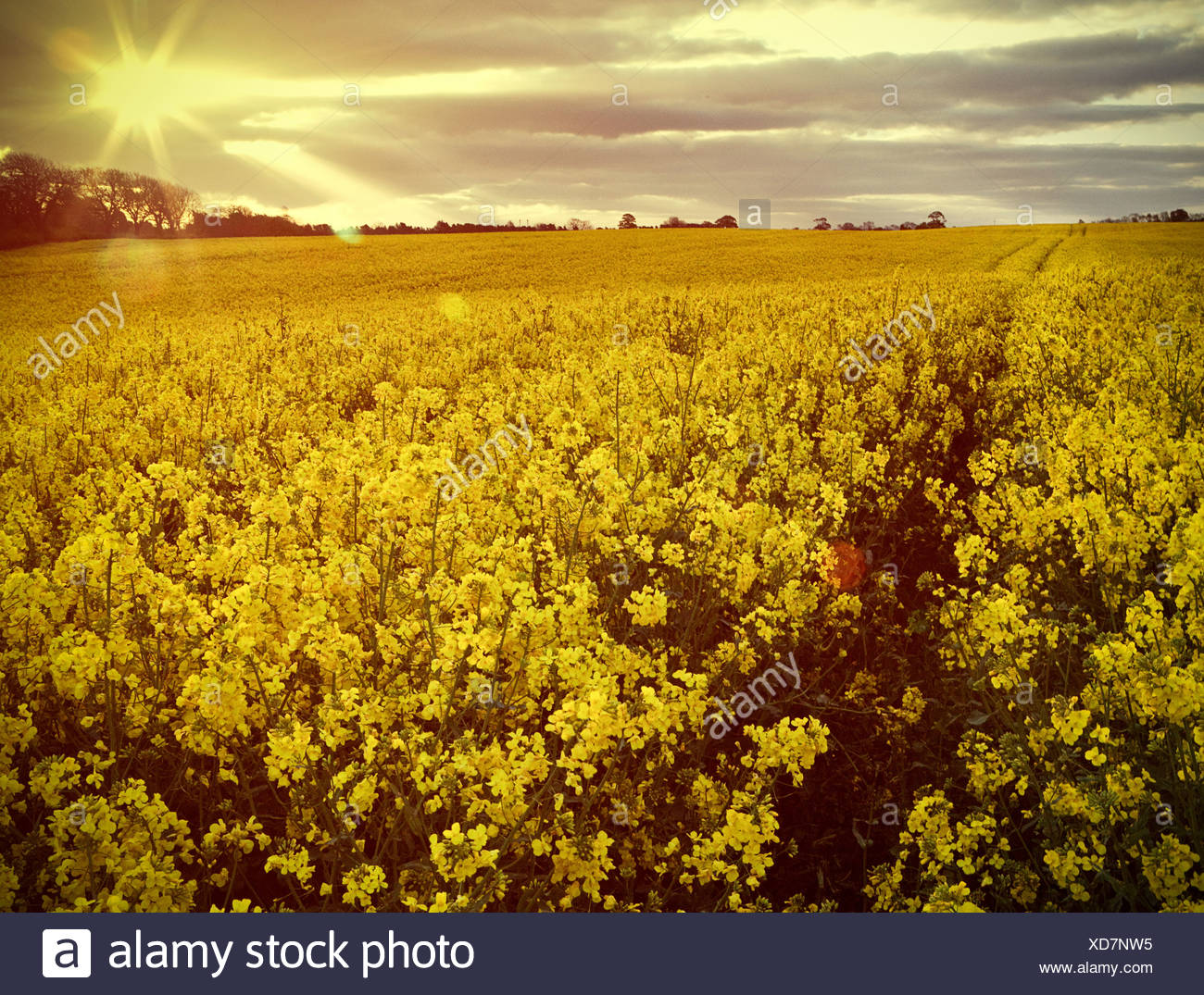 Flowers In Field Stock Photos Flowers In Field Stock Images Alamy