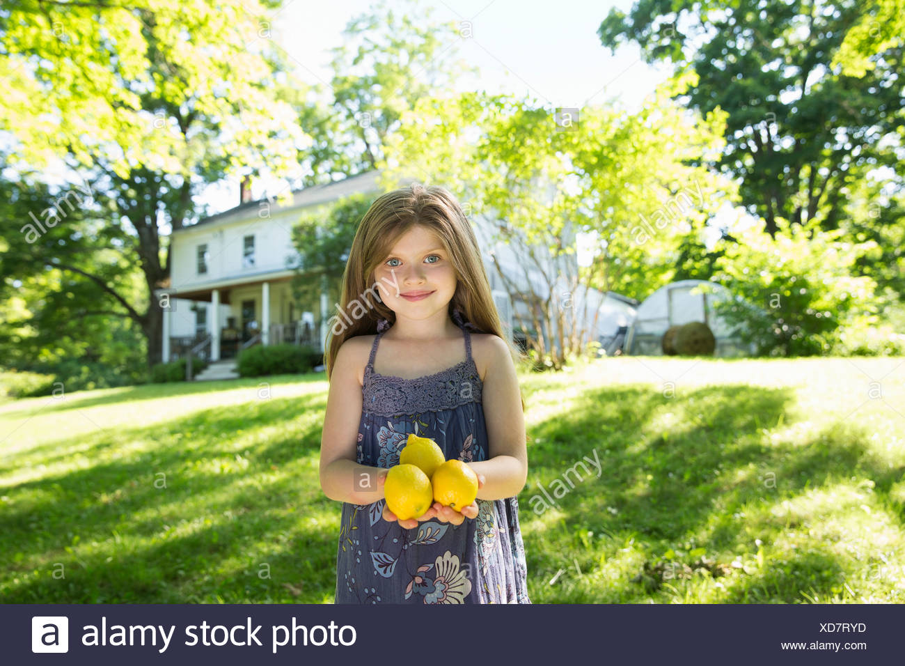 Outdoors in summer. On the farm. A girl in the garden holding three large lemon fruits in her hand. - Stock Image