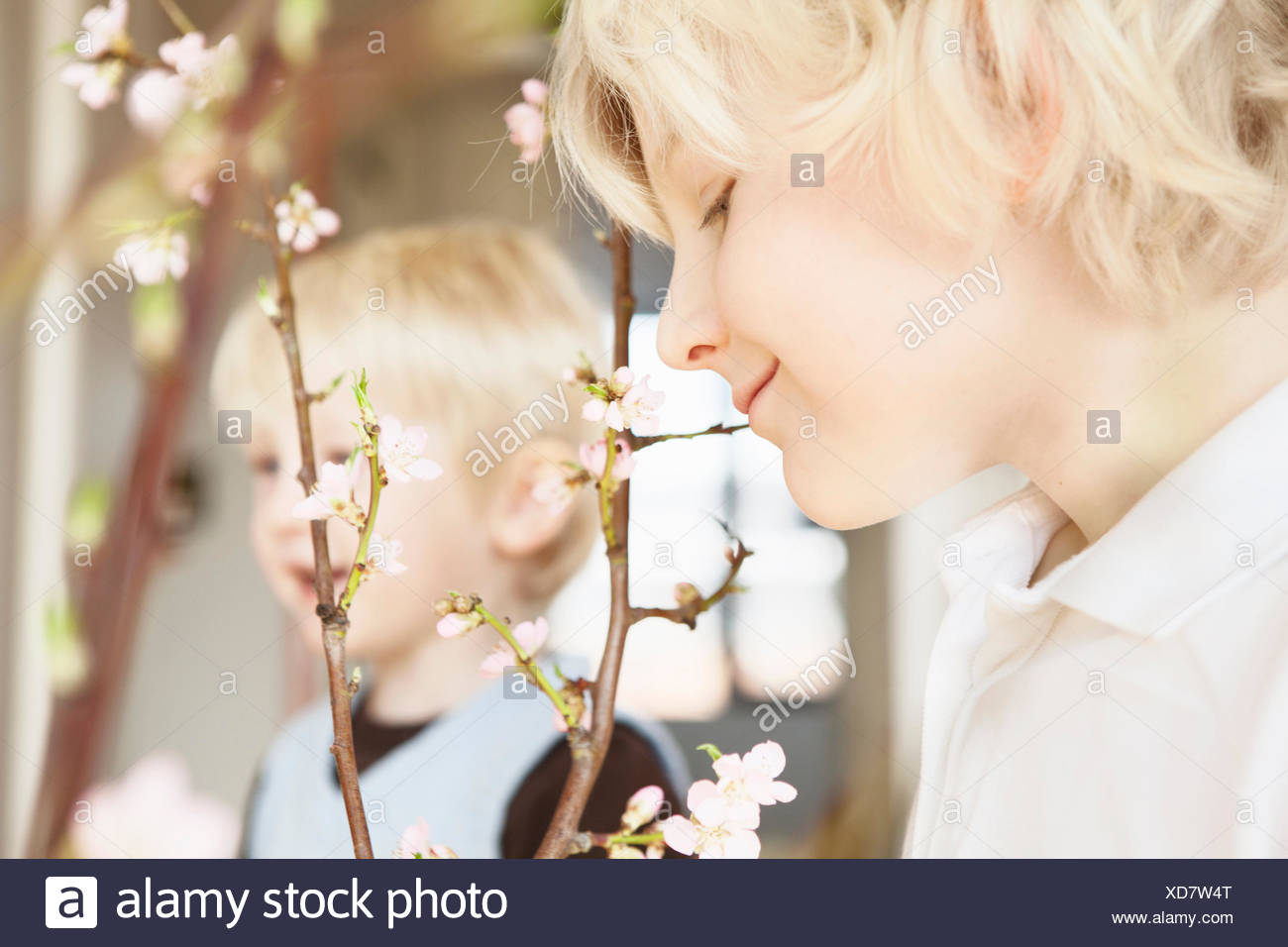 Close up of two brothers and blossom twigs in sitting room Stock Photo