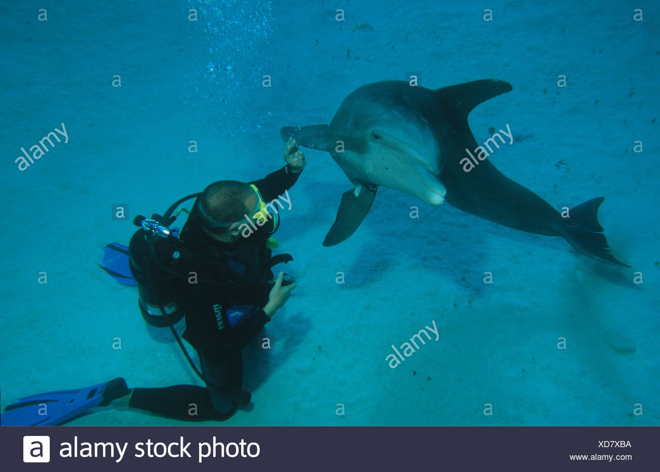 zoology, mammal / mammalian, dolphin (Delphinidae), Grand Bahama, Bahamas, diver with dolphin, Additional-Rights-Clearance-Info-Not-Available - Stock Image