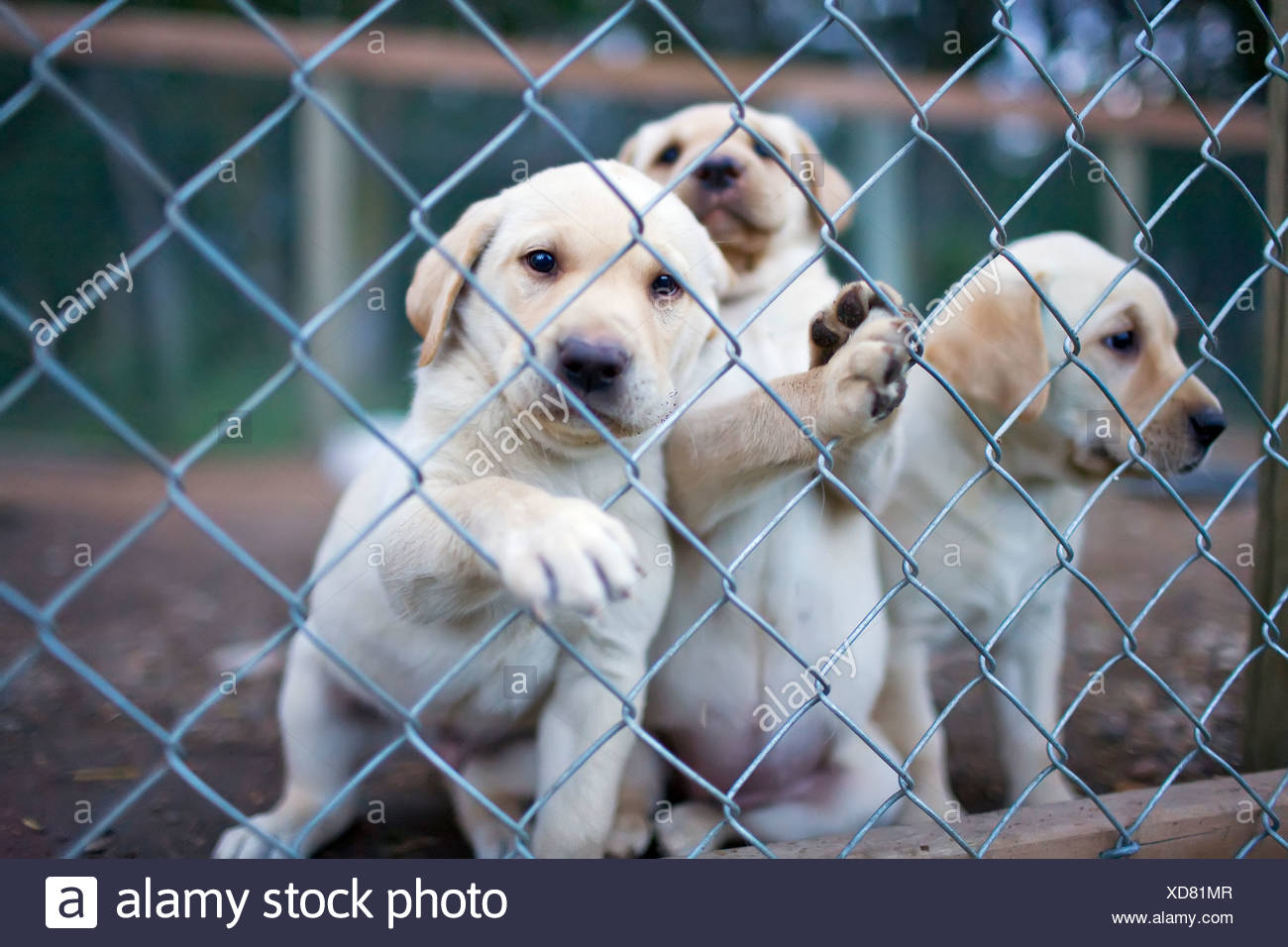 Yellow Dog Kennel Stock Photos & Yellow Dog Kennel Stock Images - Alamy