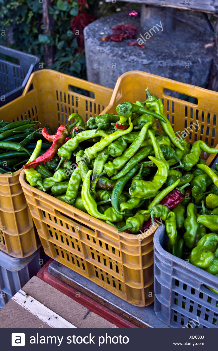 Green peppers in a plastic tray, greengrocery in Calabria, South of Italy, Italy, Europe - Stock Image