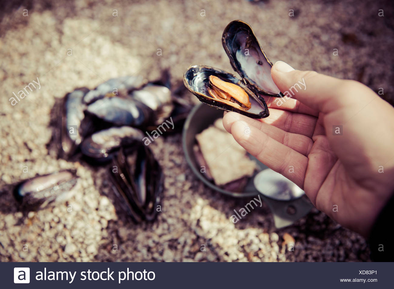 Close-up of a mature woman's hand holding mussel - Stock Image