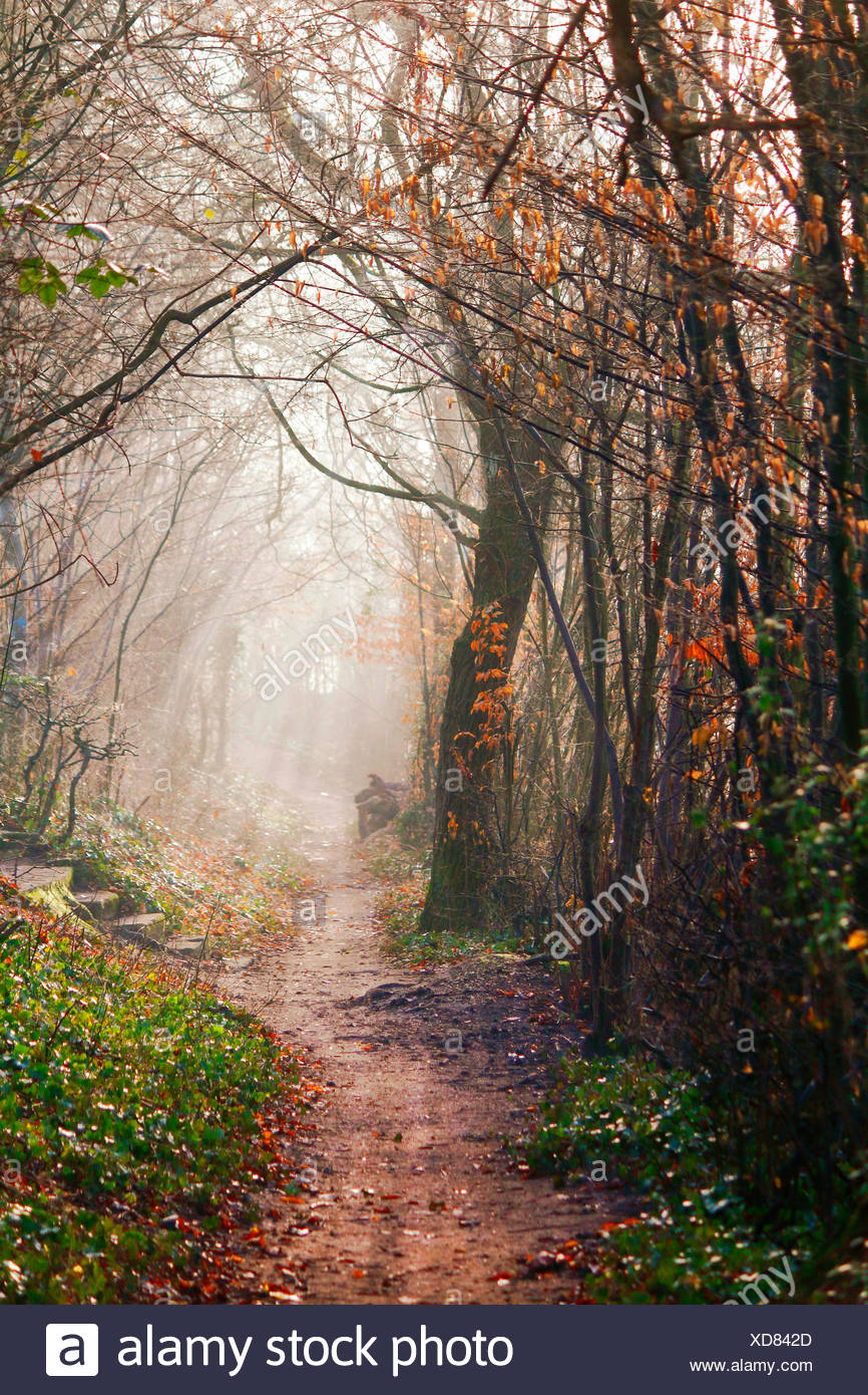 forest path in autumn with sunbeams, Germany, Baden-Wuerttemberg, Kehl Stock Photo