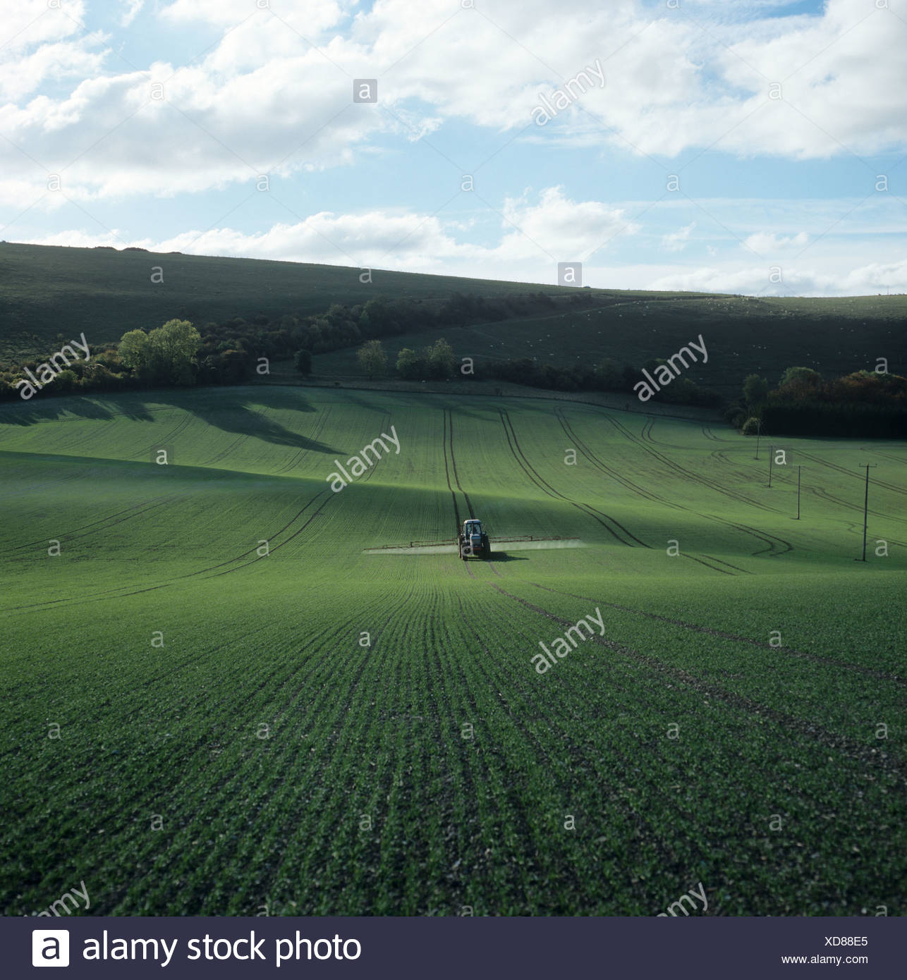 Tractor with trailed boom sprayer spraying a young wheat crop in autumn - Stock Image