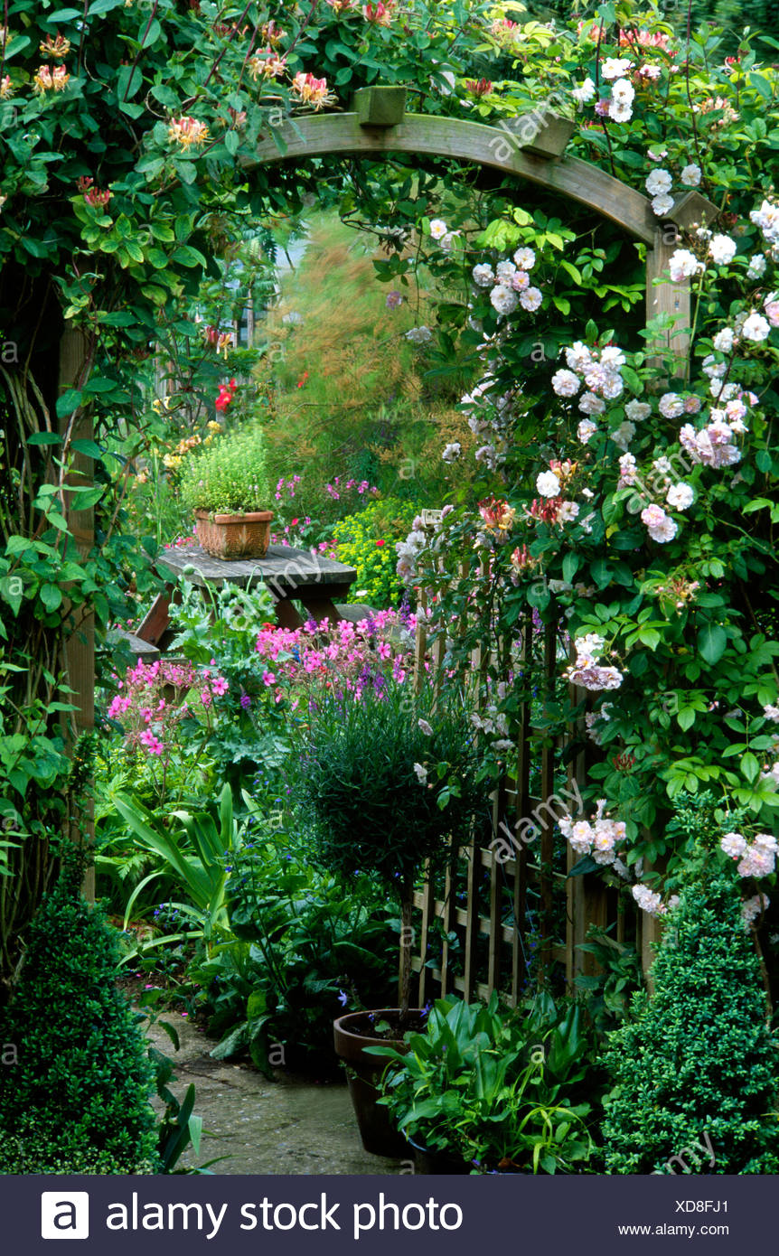 Cottage Garden Norfolk England Uk Climbers Arch Trellis Rose Rosa