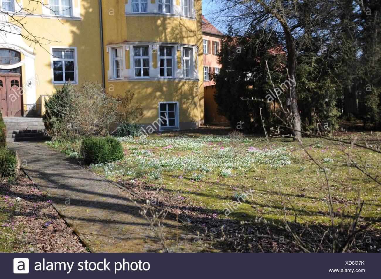 Leucojum vernum, Snowflake Stock Photo