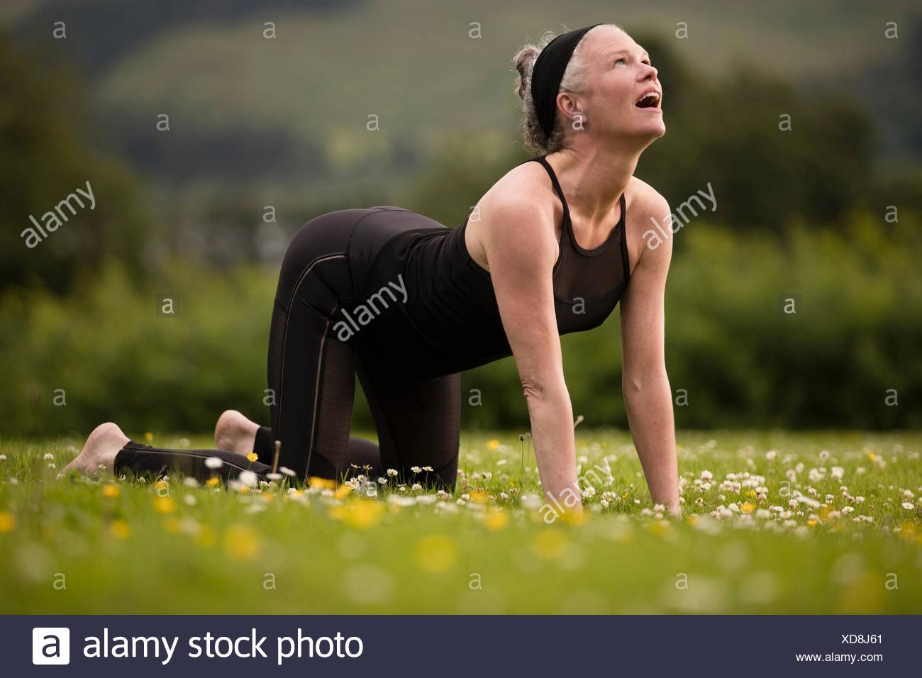Mature woman practicing yoga cat pose in field - Stock Image