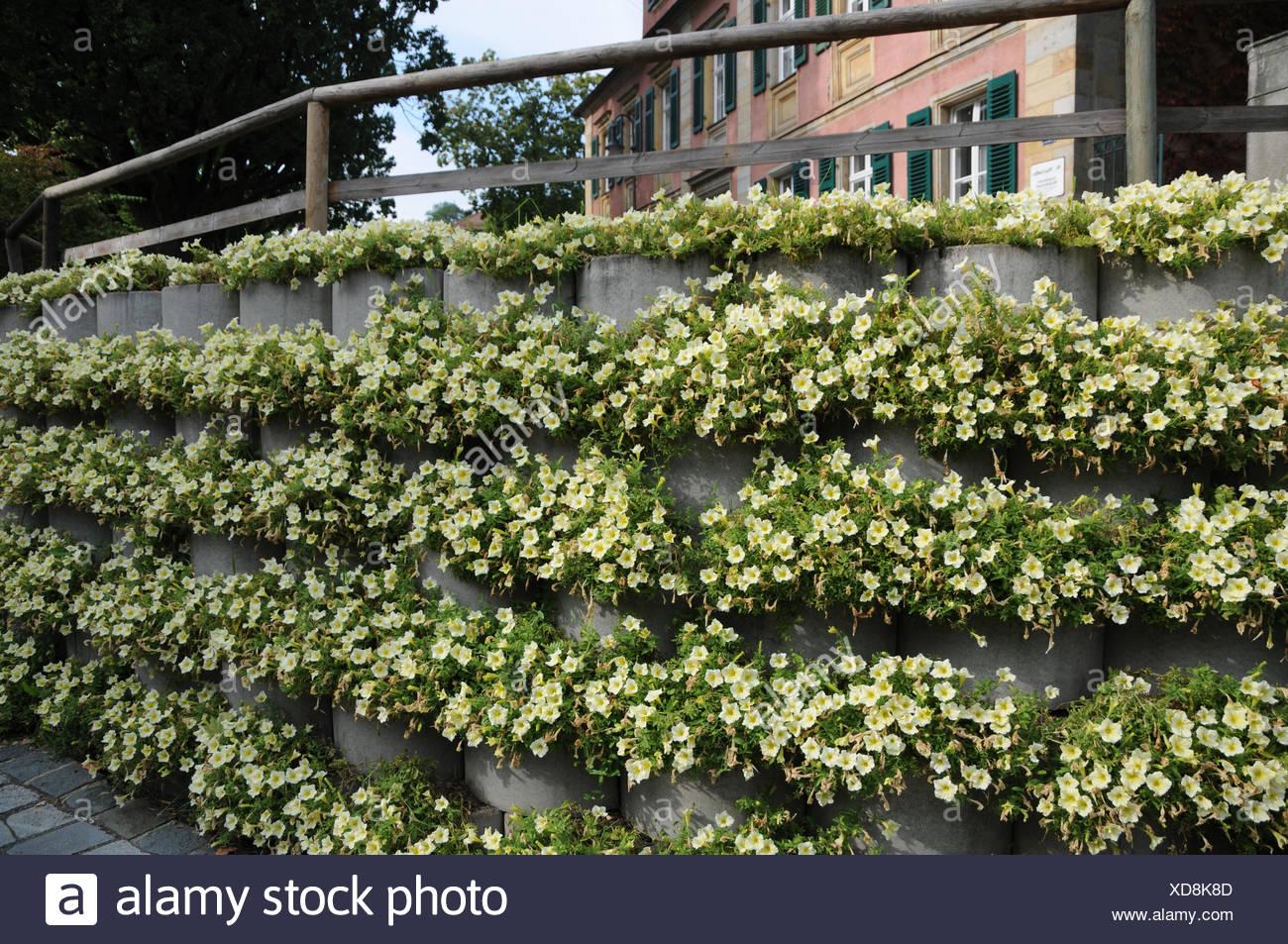 Petunia, Concrete-wall, noise protect - Stock Image