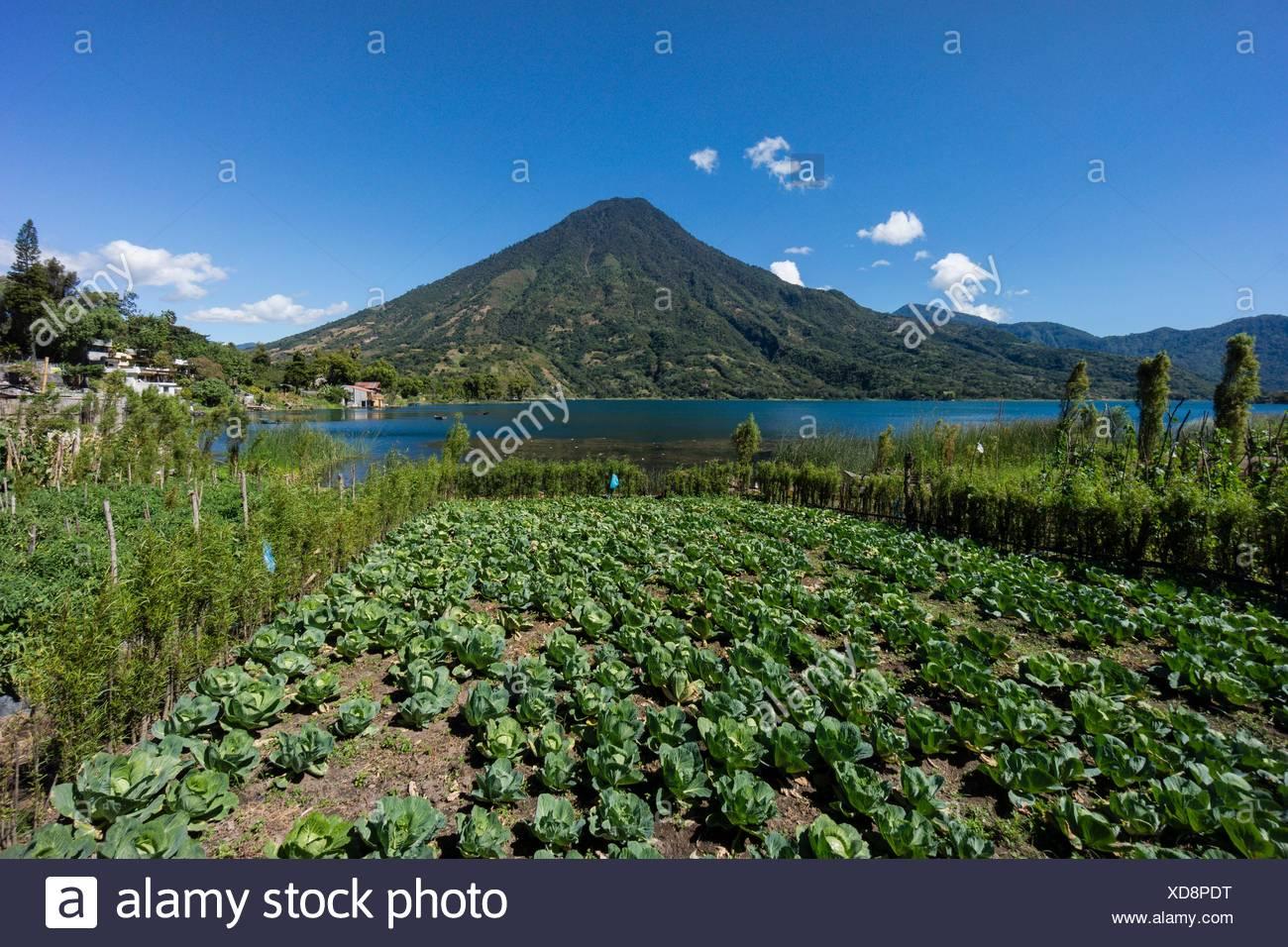 volcán San Pedro, suroeste de la caldera del lago de Atitlán , Santiago Atitlán. Tiene una altitud de 3. 020,Guatemala, Central America. - Stock Image