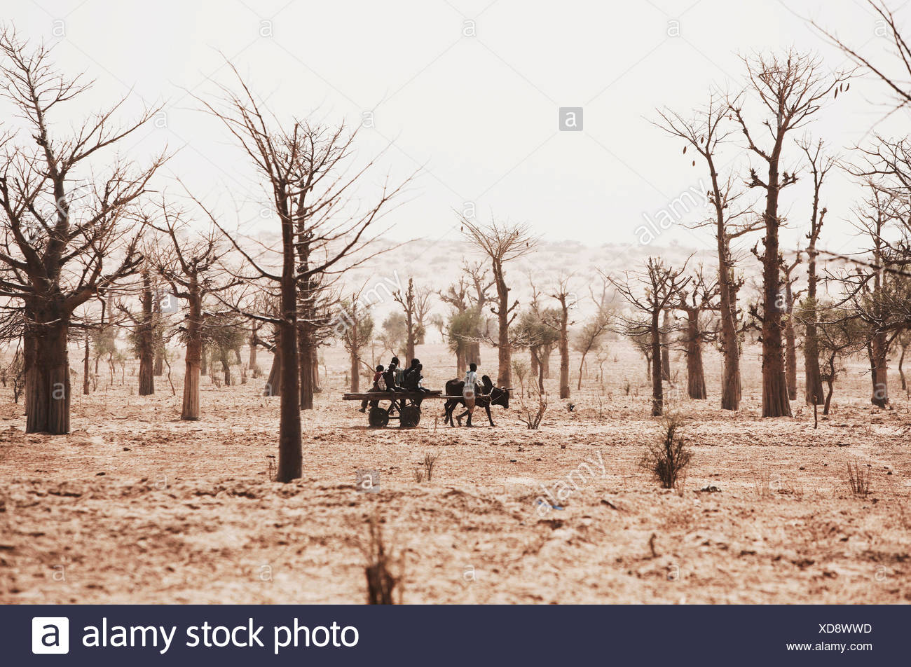 Children with a cart in stark landscape with trees, Dogon Land, Mopti region, Mali - Stock Image
