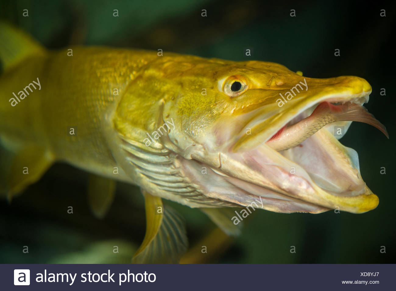 Frehswater Stock Photos & Frehswater Stock Images - Alamy