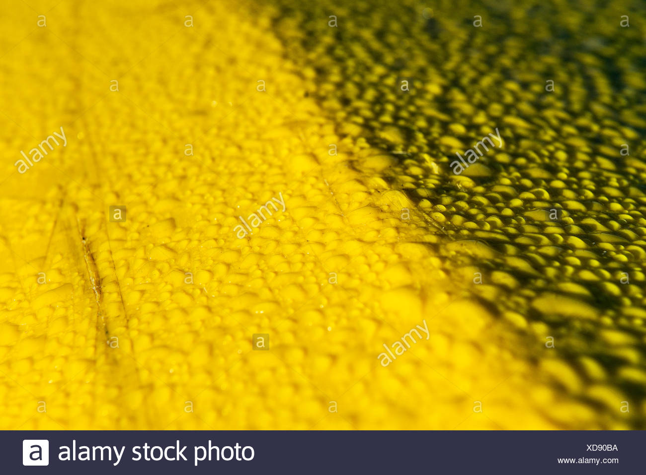 Water beading up on a yellow plastic surface. Stock Photo