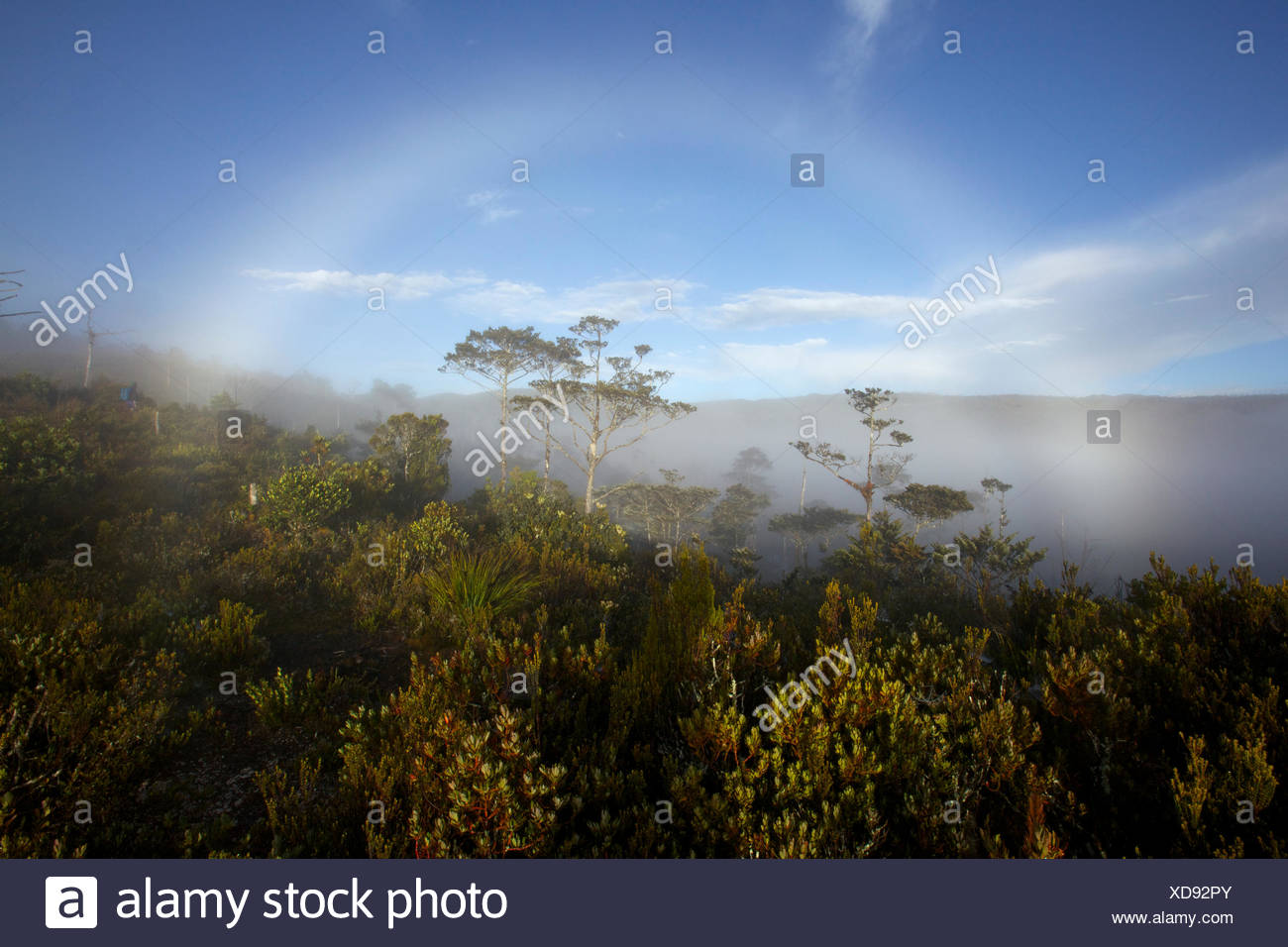 A fog bow in the Jayawijaya Mountains. - Stock Image