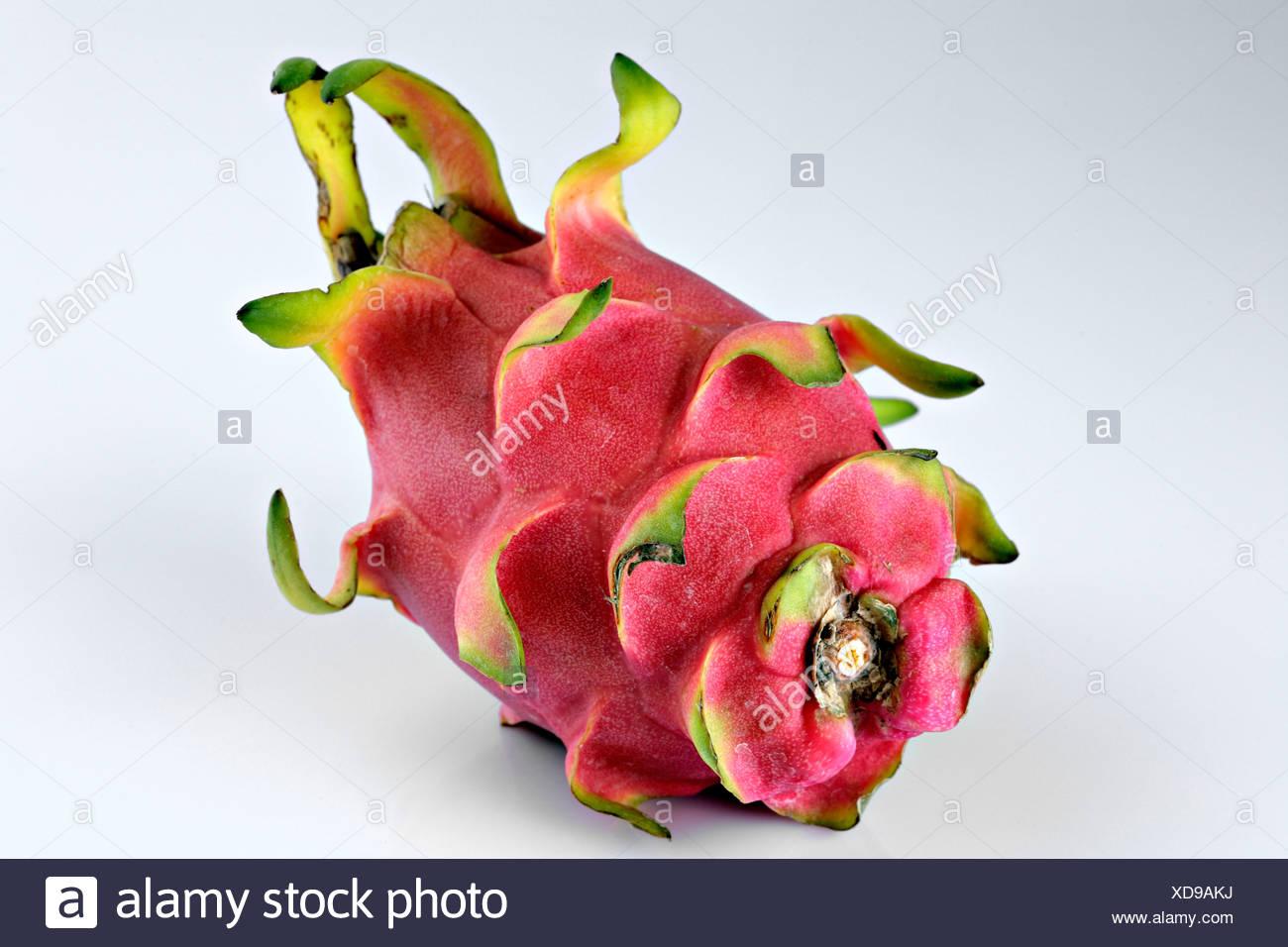 how to grow pitaya cactus
