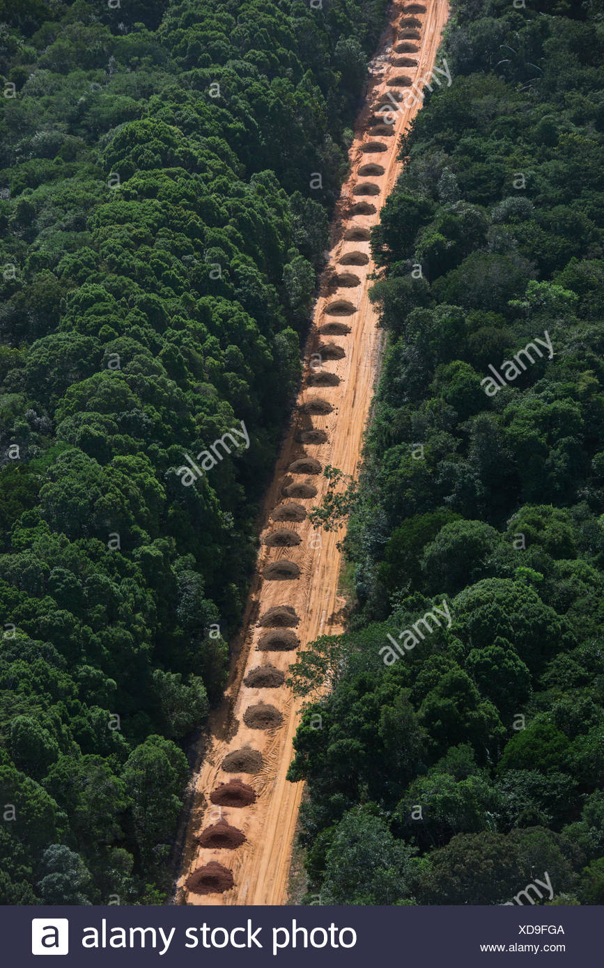 Dirt road running  through tropical rainforest, Guyana South America - Stock Image
