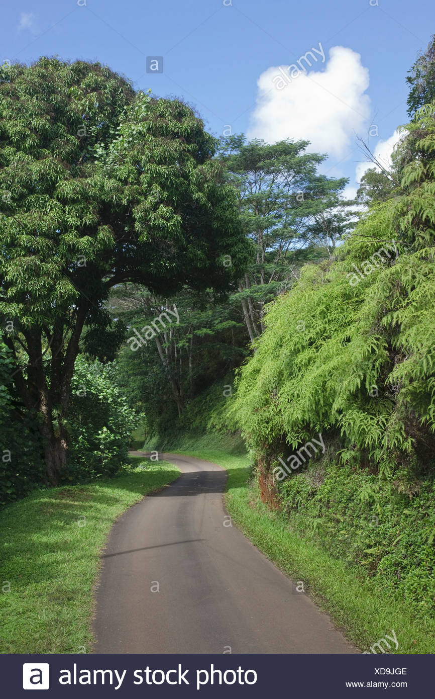 Kauai, Hawaii, United States Of America; One Lane Curvy Road Passes Through Lush Green Forested Countryside - Stock Image