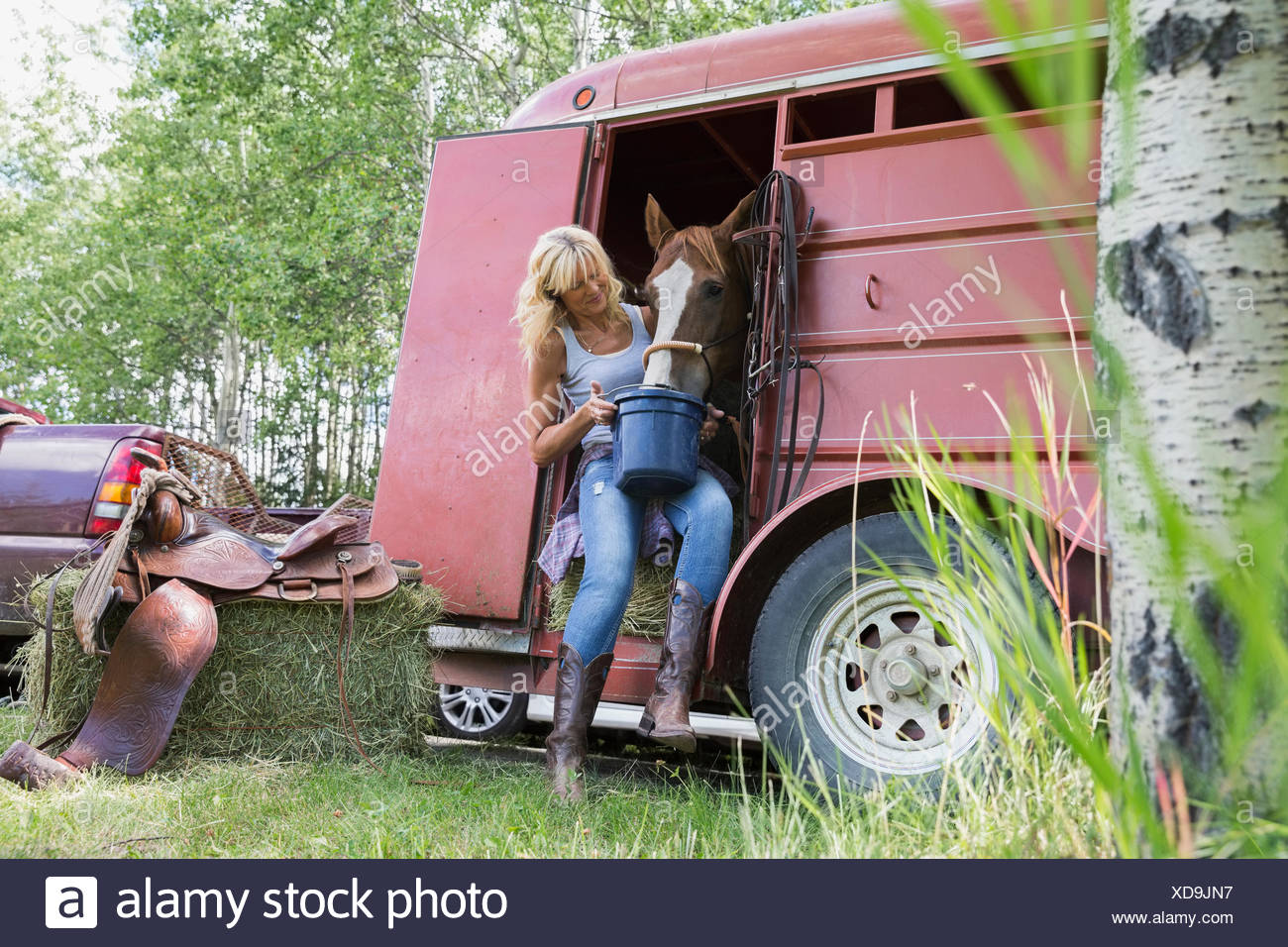 Woman feeding horse in trailer - Stock Image