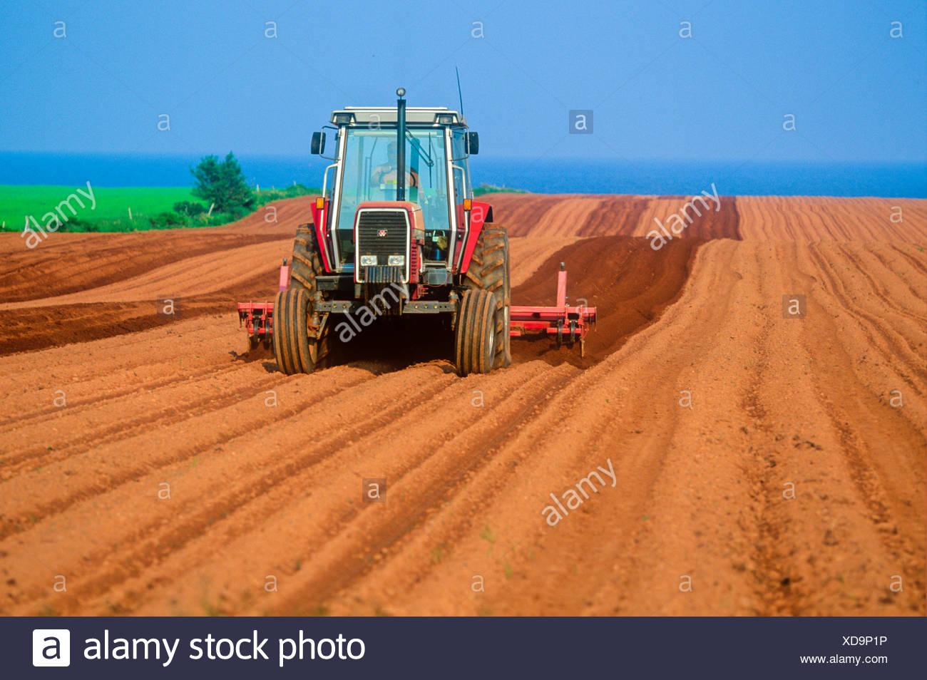 Tractor hilling potatoes, Argyle Shore, Prince Edward Island, canada - Stock Image