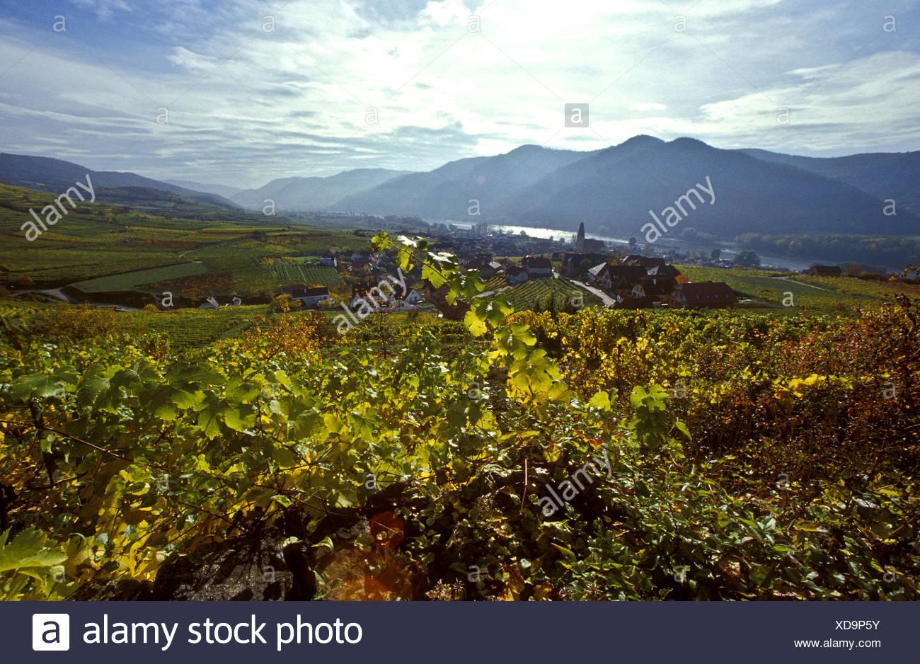 wine-growing district in autumn, Austria Stock Photo